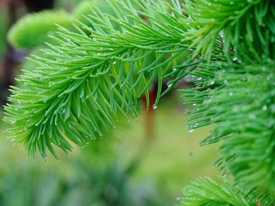tree-1224743_640