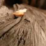 Poznaj świat mrówek