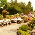 Arboretum w Wojsławicach, czyli podziwiając zaczarowany ogród