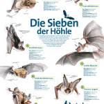 Bad Segeberg Kalkberghohle – w krainie nietoperzy