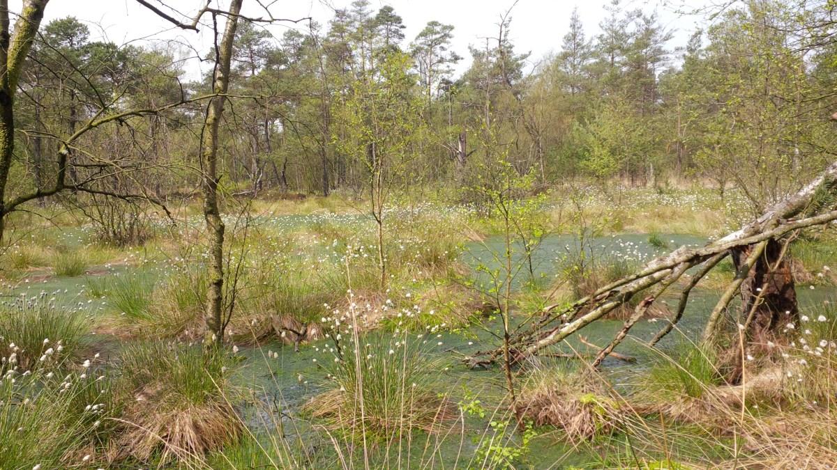 Wrzosowa kraina - Lüneburger Heide