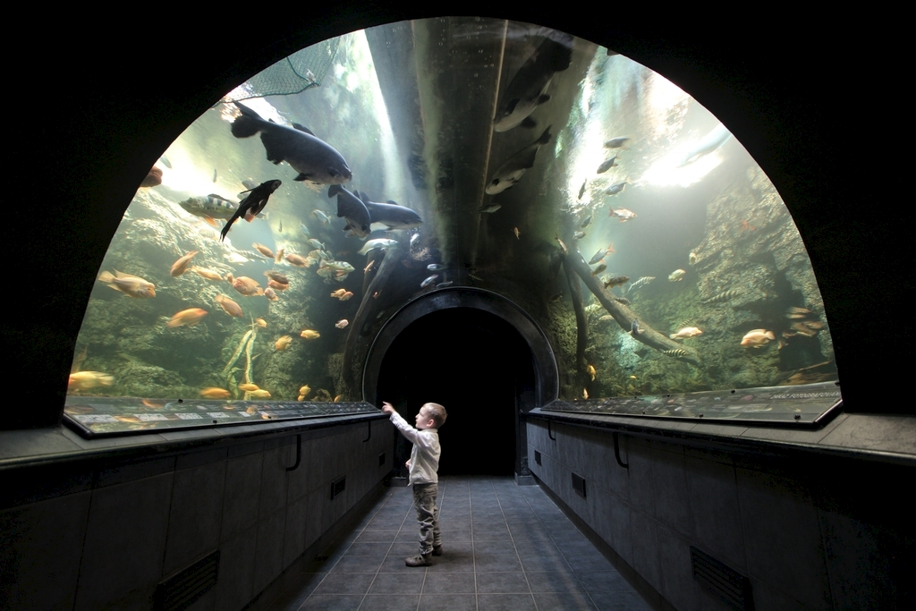 podvodni-tunel-obriho-akvaria-img_1152.jpg