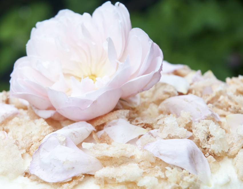 tort różany