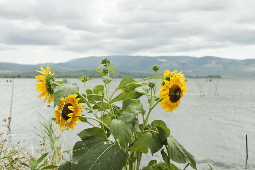Półwysep Gargano - raj na ziemi