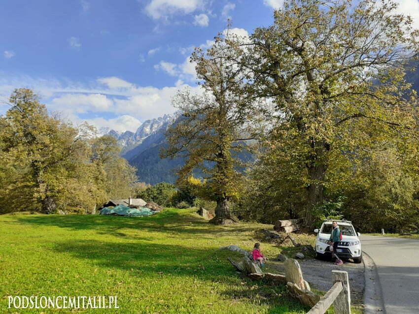 Największy w Europie las z kasztanami jadalnymi znajduje się w Szwajcarii
