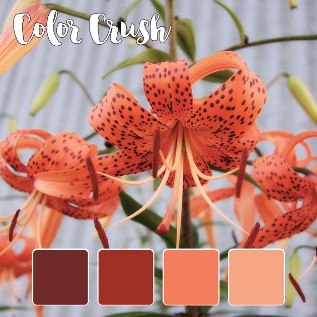 color_crush_7-30-15_flowers