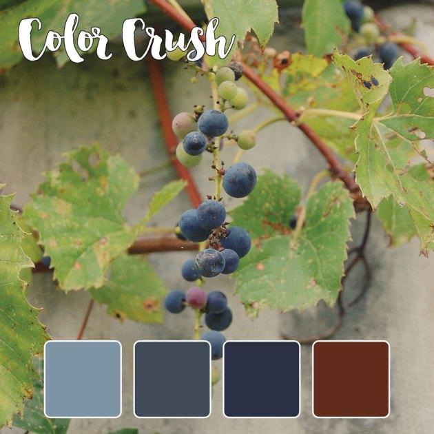 color_crush_9-2-15_grapes