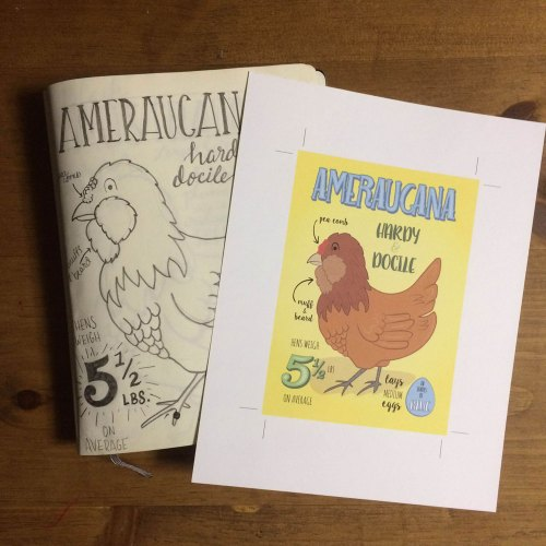 05_ameraucana_side-by-side_rotated
