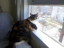 Busy body cat