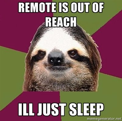 sloth sleep