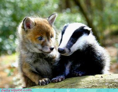 cute-baby-animals---british-squee