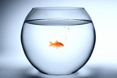 Freelance writer on regulatory policy