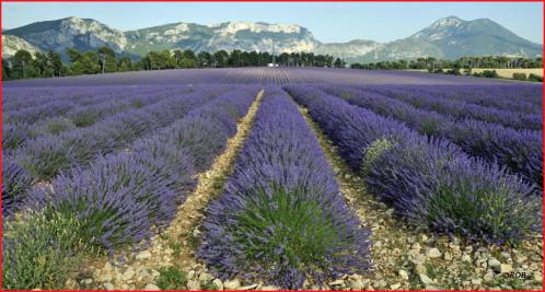 Là Haut Sur Le Plateau Poèmes En Provence