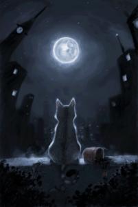 chat-lune-nuit-fb-1-juillet-13