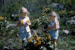 Picking wildflowers