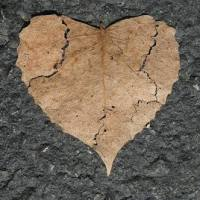 Of Fading Love
