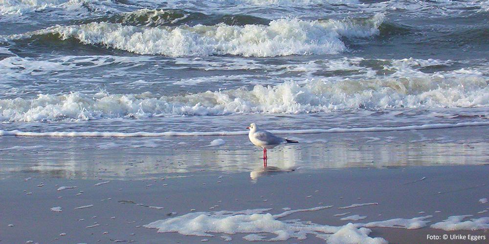 Am Meer sein