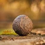 Voie spirituelle : un chemin vers l'extase ou la vie ?