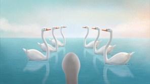 Cisne Assustado3
