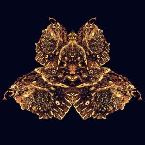 Gold-Moth