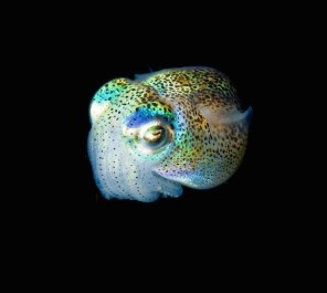 Glowing-Creatures-in-Black-Water-17