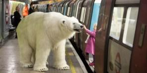 Polar-Bear-in-London1