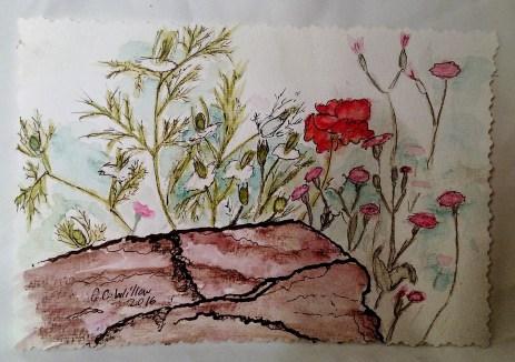 Poppy at Springer Botanical ink & watercolor