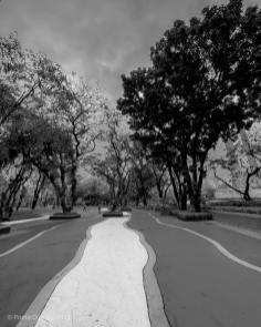 poetic dustbin - Parallel Timelines
