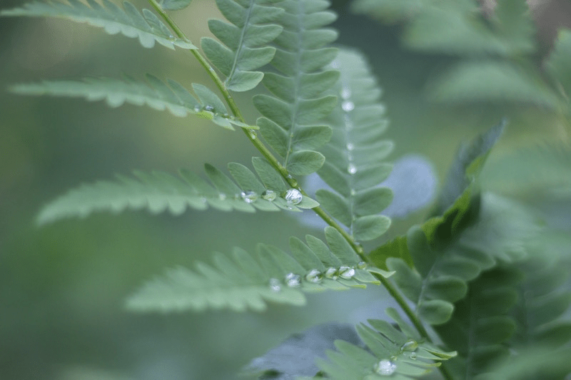 Fern-Rain With Leaf Swirl-2.3 by L.L. Barkat