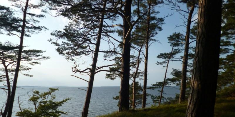 gurkenscheibe by Wald und Meer III