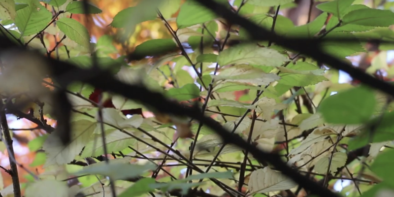 meditative video autumn leaves