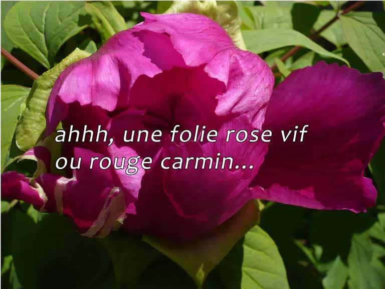 ahhh, une folie rose vif ou rouge carmin...