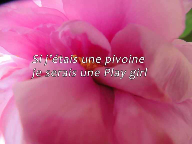 Si j'étais une pivoine je serais une Play girl