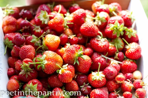 freshly-picked strawberries
