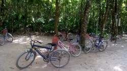 Na rowerach w głąb dźungli! On the bikes into the jungle!