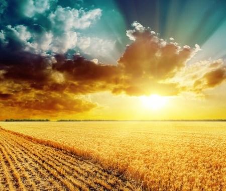 Artistic image of golden sunset against teal sky over golden cornfield