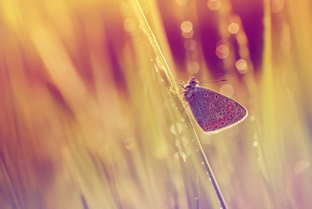 Overexposed image of butterfly on a branch in a field of grass