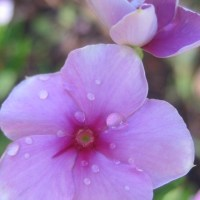 FRAGRANCE IN THE MORNING (A Prayerful Song)