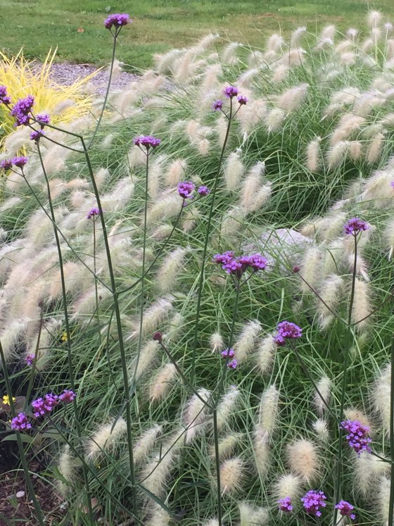 Grass and purple flowers