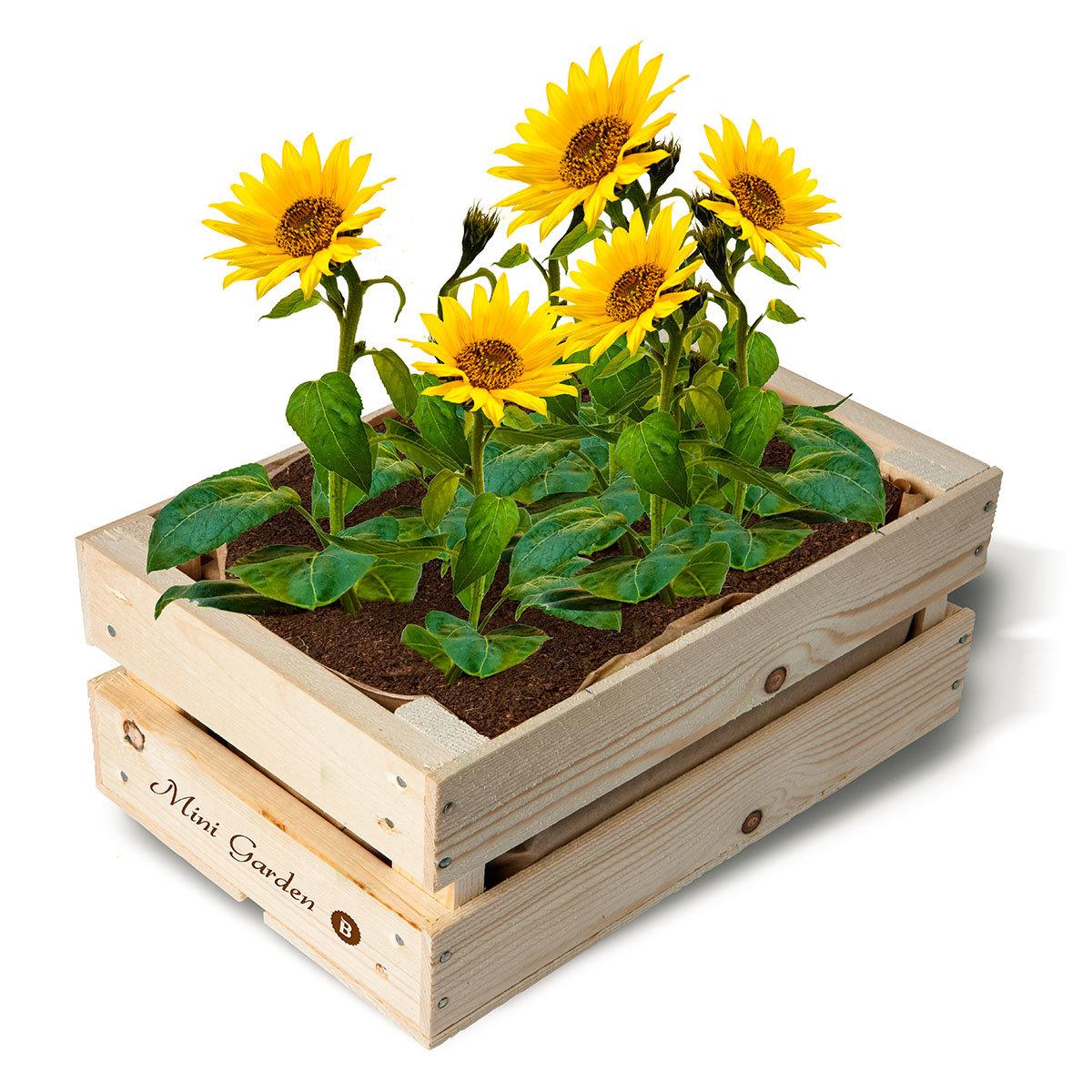Mini Garten Deko Kaufen Deko Mit Holz Garten Frühling Deko Für