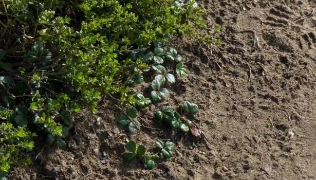 Dearest Dirt