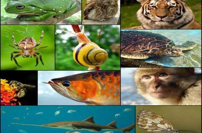 zoologia regnul animal