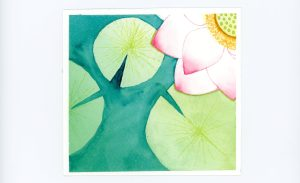 Waterlily Watercolor Illustration