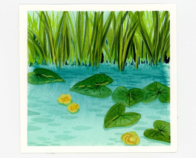 Yellow pond lilies in watercolor and gouache