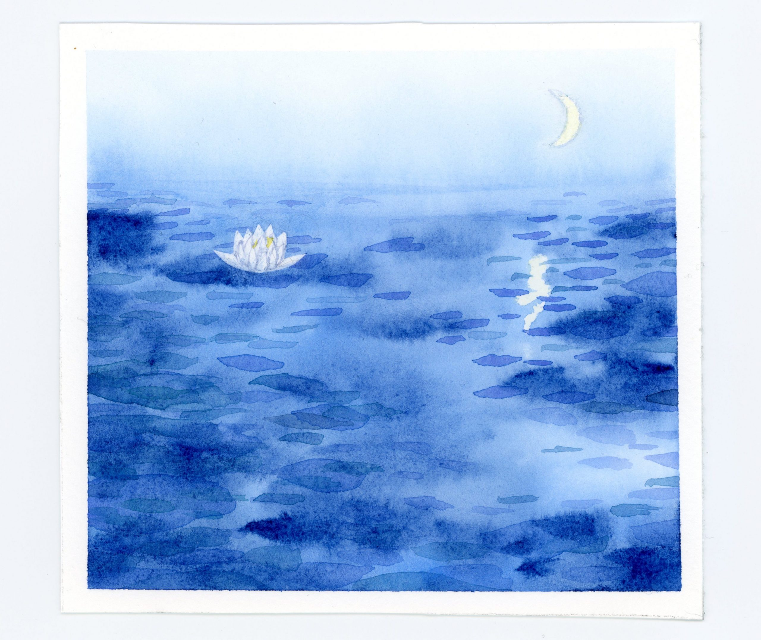 waterlily at night watercolor illustration