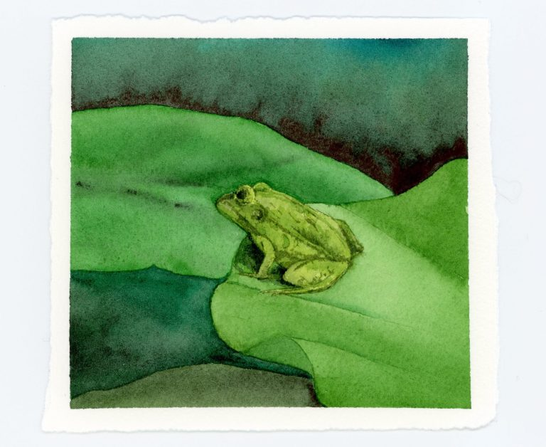 frog on lily pad watercolor illustration