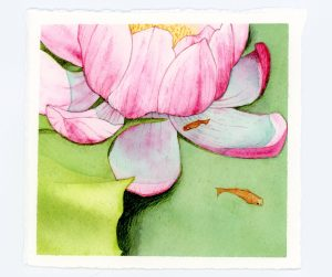 Waterlily watercolor illusration from Kew Gardens, UK
