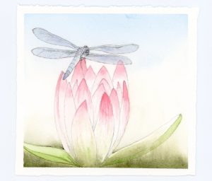 Dragonfly and waterlily illustration in watercolor and ink