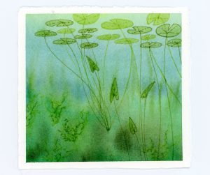 underwater lily pad watercolor and ink illustration