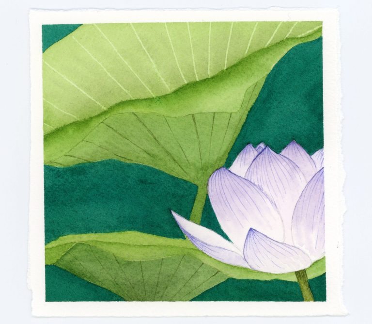 Waterlily watercolor and ink illustration